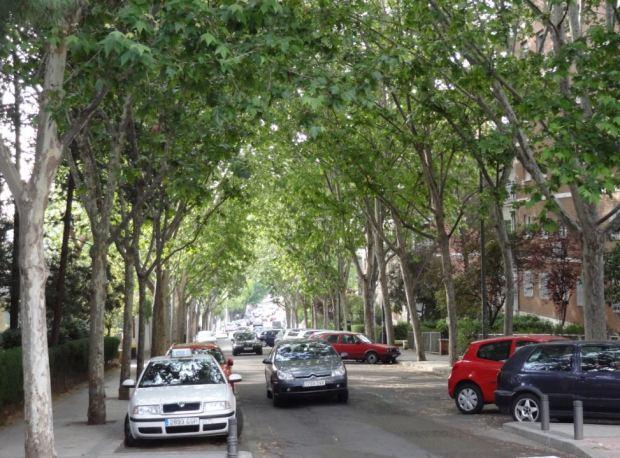 Calle Conde de Cartagena, en Madrid. Plátanos en lugar de árboles tropicales, aunque también una buena cubierta vegetal, y menos piedra en las superficies
