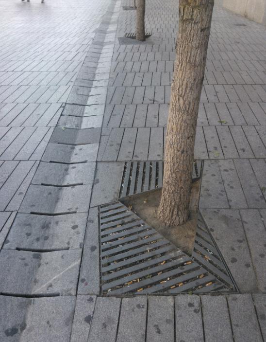 """Un árbol sobre """"tierra firme"""", en el borde norte de la plaza. El alcorque es bastante reducido."""