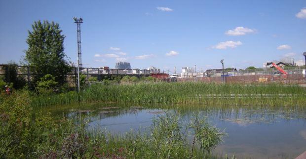 Parte de los nuevos estanques